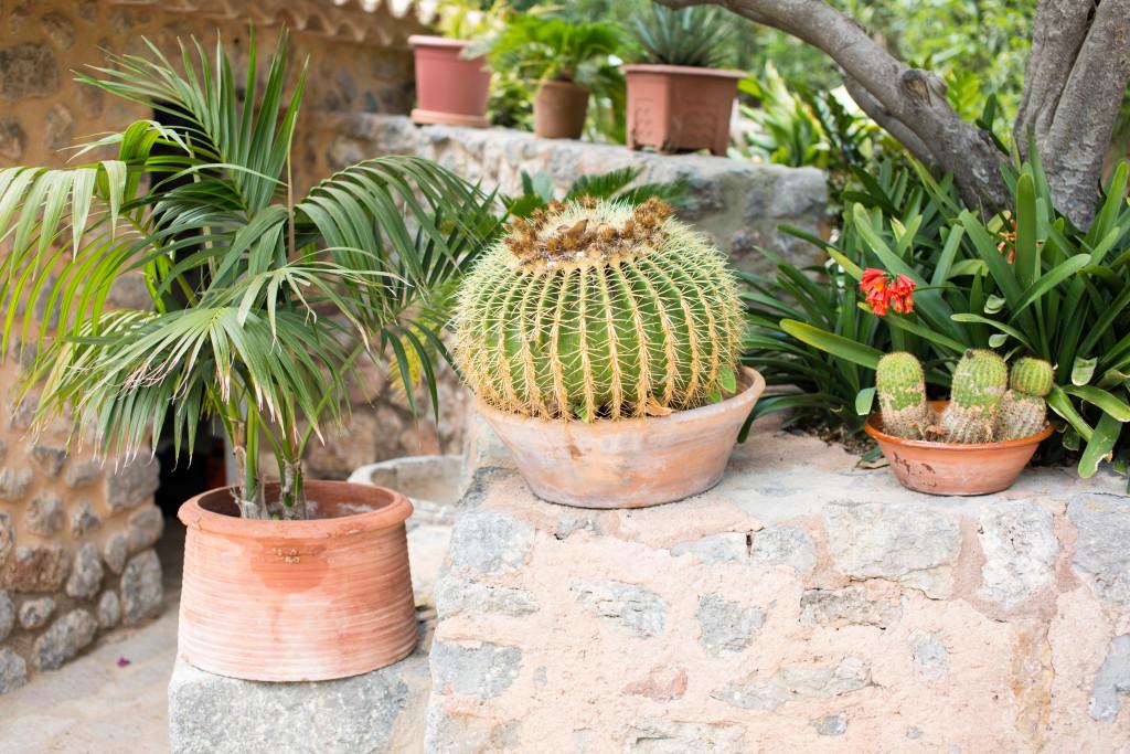 Mallorca Wedding, Mallorca wedding Photographer, Soller Wedding photographrer, cactus plants