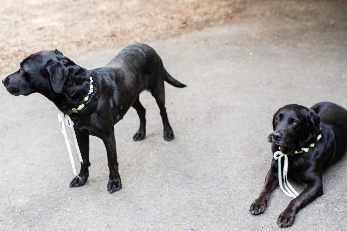 Boho Garden Wedding dogs as wedding