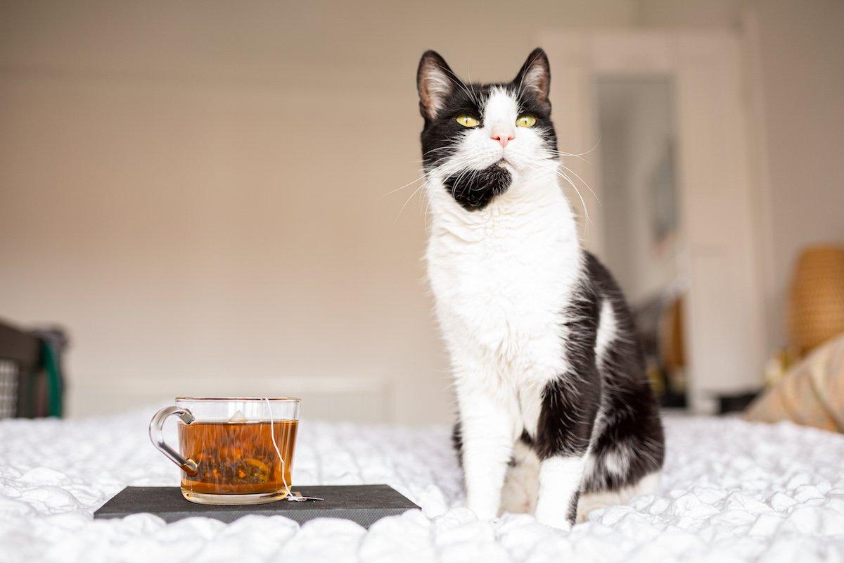 cat and tea on ed